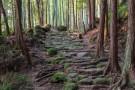 """参拜被誉为""""使人重生的熊野参拜道""""熊野三山・熊野速玉大社,入住浦岛酒店,享受大洞窟温泉"""
