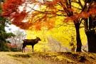 参拜历史悠久的奈良春日大社(朱红色的回廊)、在老字号的奈良宾馆享用午餐、泛舟于伏见十石舟!