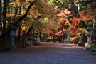 Slip back in time by wearing a kimono and visiting the Katori Jingu shrine, and feel this spot's power